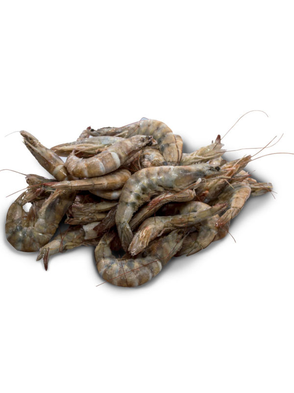 Camarones con Concha