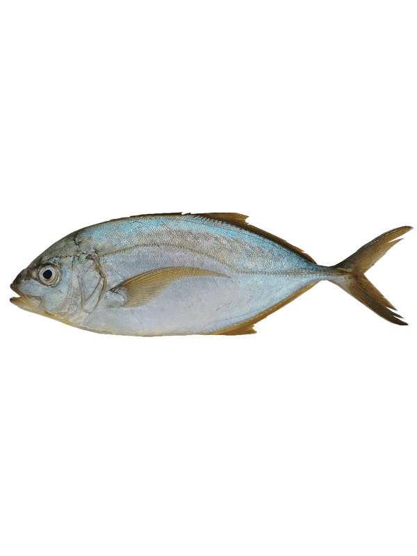 Cojinua